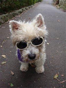 kutya napszemüveg