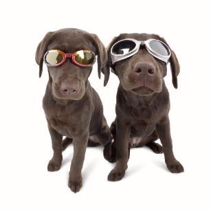 Kutyaszemüveg