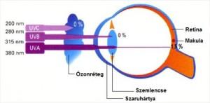 UV sugárzás és a szem