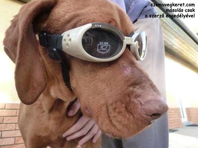 Doggles kutya napszemüveg